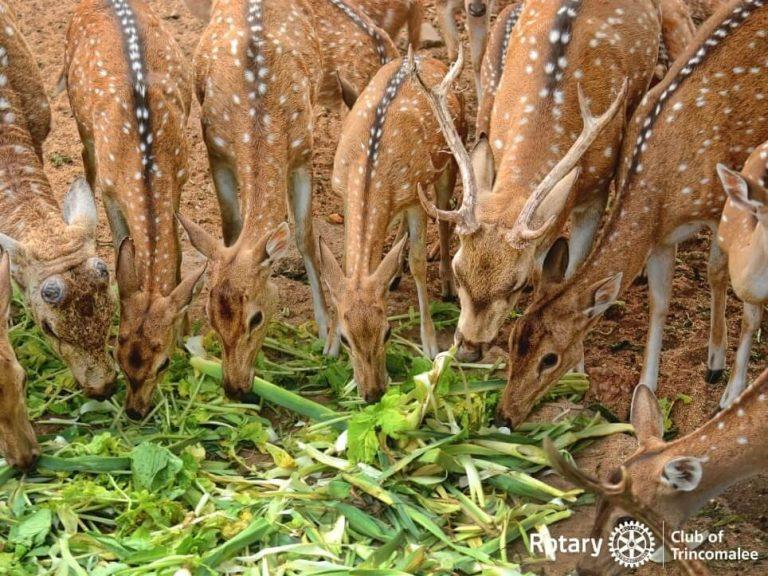 Save Trincomalee Deer
